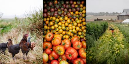 Clare Barboza / Documentary Food Photographer