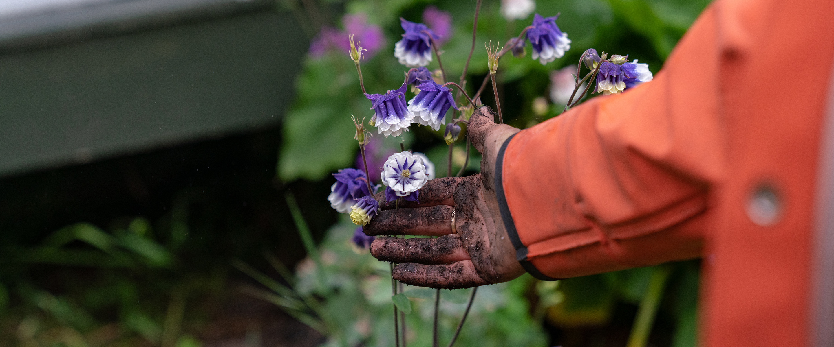 In Full Bloom: Flower Farming and the Roots of a Growing Movement