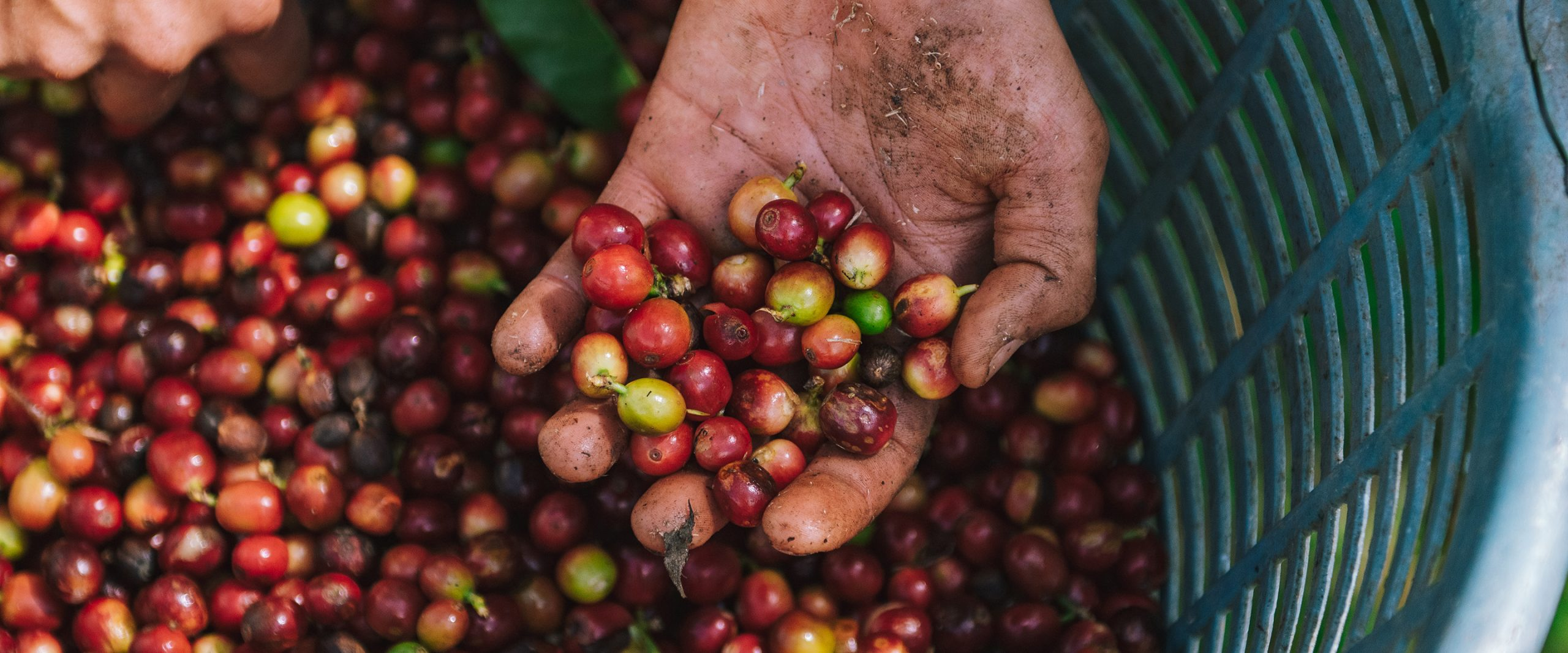 Bean Equality: Narrowing the Gender Gap in Coffee Production