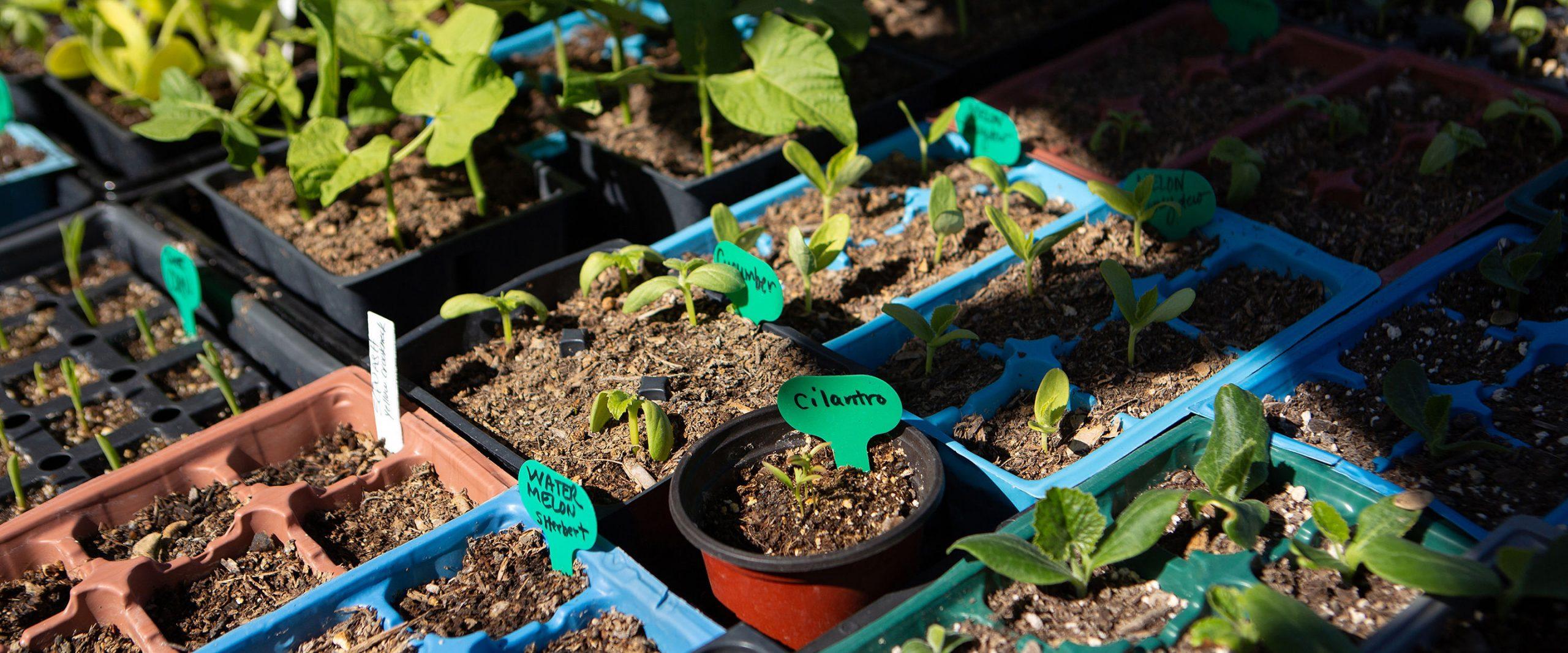 Avery Cramer and the Garden Plot