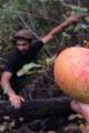 Matt Kaminsky / Apple Specialist / Gnarly Pippins