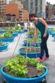 Anthony Reuter / Volunteer Coordinator / Just Food
