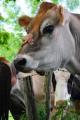 John McDaniel / Program Director / Manhattan Country School Farm