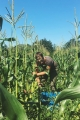 Rachel Stievater / Farm Manager and Co-Director / UVM Farmer Training Program
